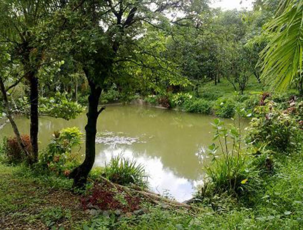 pond3